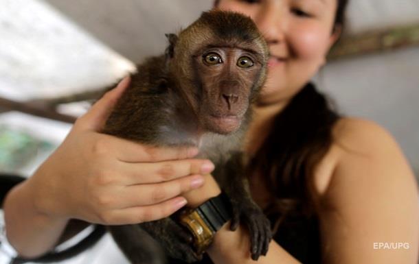 Мавпу навчили керувати технікою силою думки