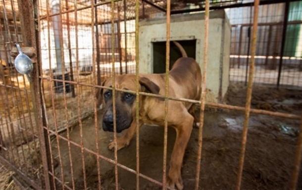 Более 60 псов спасли от убоя на мясоферме в Южной Корее