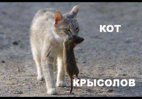 Олег Старых: Большая политика - это мир для крыс.