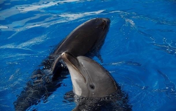 Міноборони РФ збагатиться п ятьма дельфінами