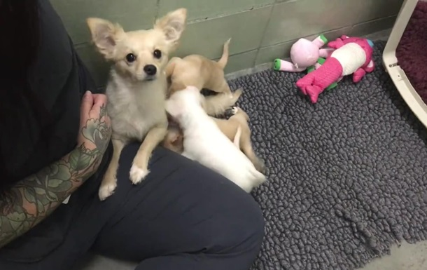 Видео воссоединения щенков с мамой растрогало сеть