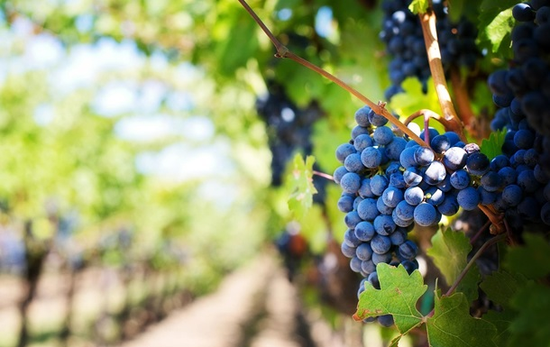 Глобальное потепление улучшает урожаи вина - ученые