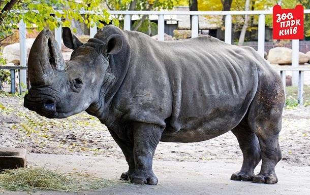У київському зоопарку помер найстаріший в Європі носоріг