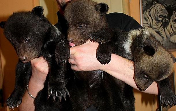 В Харьковском зоопарке родилась тройня медвежат