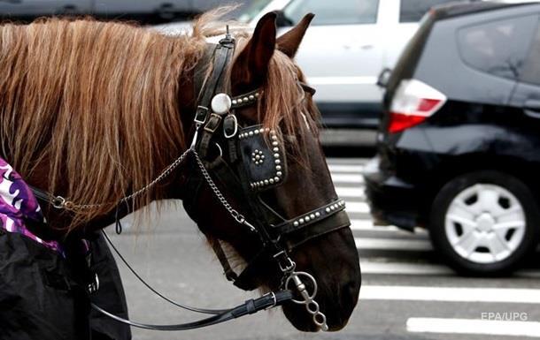 В РФ умертвили украинских лошадей без документов