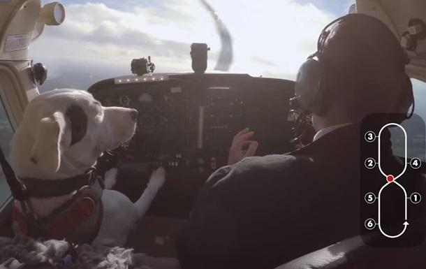 Собак навчили керувати літаком у реаліті-шоу