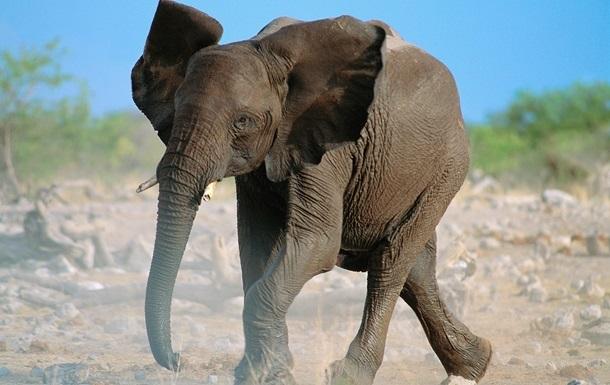 В Україні посеред траси з фури втік слон - ЗМІ