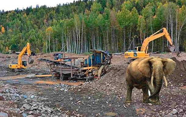 Слон, який втік в Україні, виявився жартом