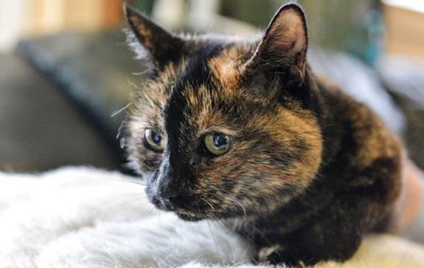 У Британії від кішки відмовлялися 30 тисяч разів