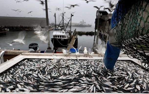 У рибі у водах Японії знайшли мікрочастинки пластику