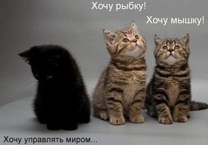 Коты - захватят мир!