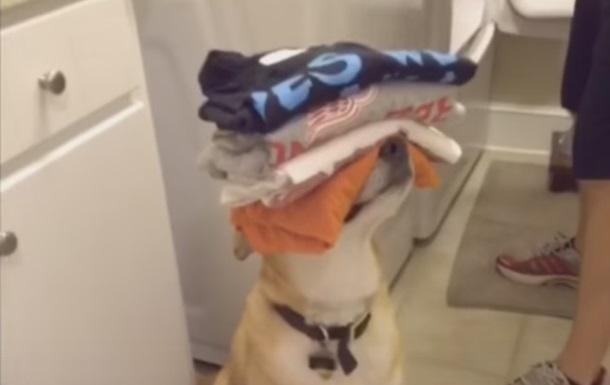 Прислужливий пес розчулив користувачів Мережі