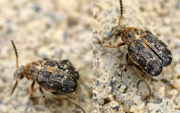 Природу гомосексуальності пояснили на жуках