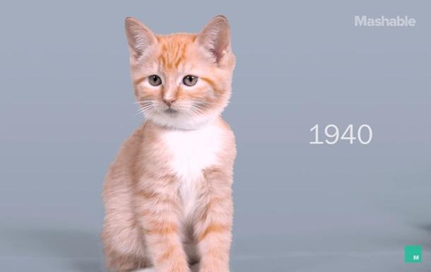 Сто лет красоты кошек показали в таймлапс-ролике