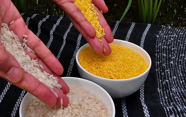 У США представили доповідь щодо нешкідливості ГМО