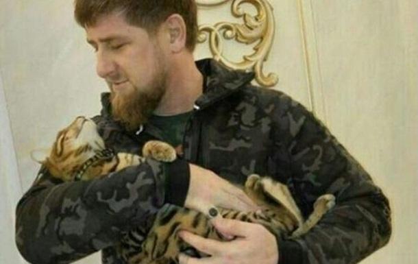 Ведучий HBO закликав швидко шукати кішку Кадирова