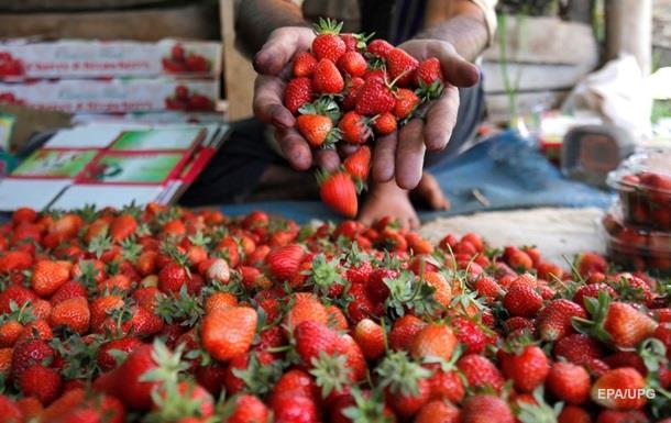 Росіяни знищать 12 тонн полуниці з України