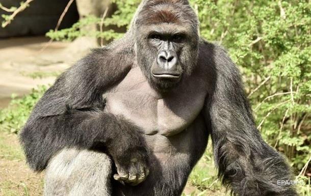 У США вимагають покарати батьків дитини через загибель горили