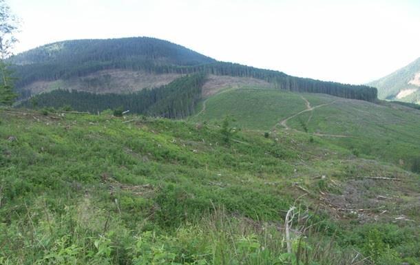 Москаль: Лес из Украины вывозят россияне
