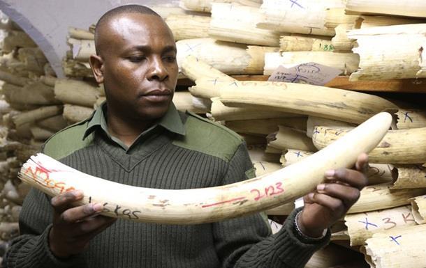 Таможня Франции перехватила крупнейшую партию слоновой кости