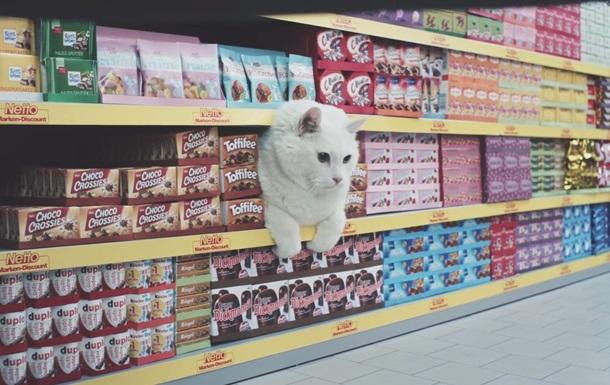 Немецкая реклама с кошачьими мемами стала хитом