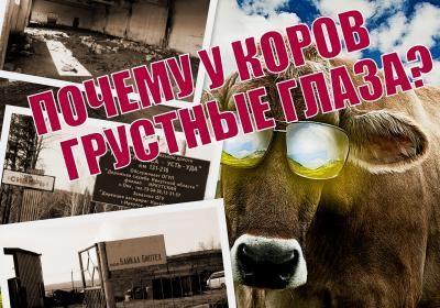 Замгубернатора Иркутской области заподозрена в нелегальном лесном бизнесе