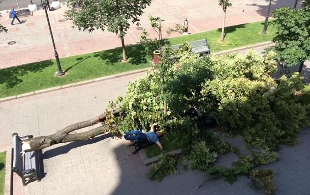 У мэрии Киева на тротуар упал каштан