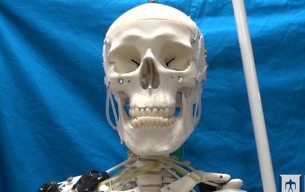 Скелет научили двигаться благодаря искусственным мышцам