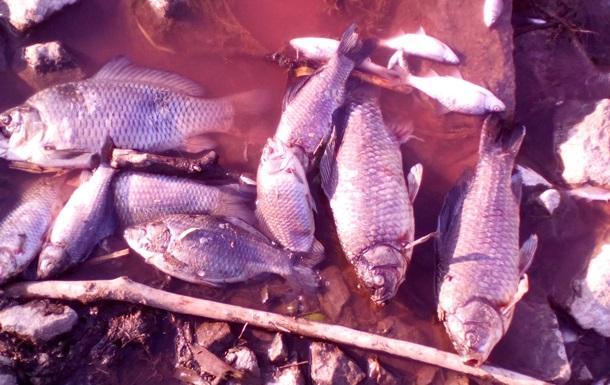 Влада пояснила забруднення річки Стугна під Києвом