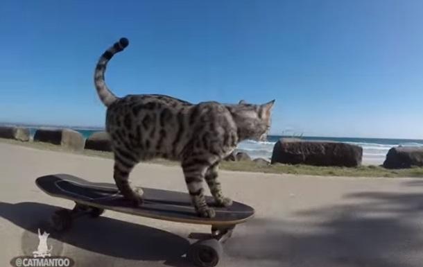 В США кот освоил езду на скейтборде