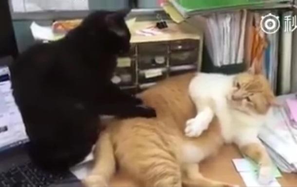 Кошачий массаж стал хитом соцсетей