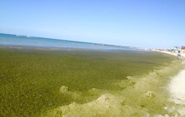 На херсонському курорті скаржаться на брудне море