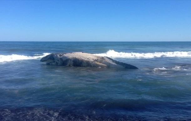 На Камчатке на берег выбросило тушу кита