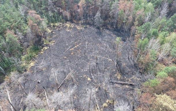 В Чернобыльской зоне потушили пожар