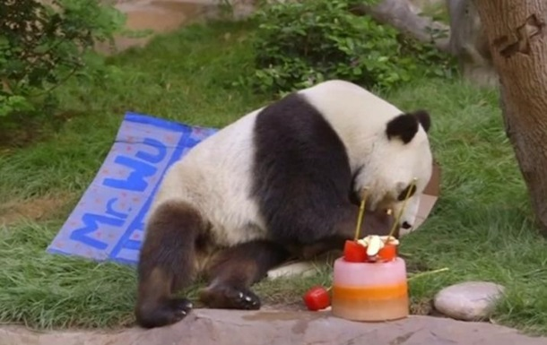 Большой панде в США подарили торт на четырехлетие