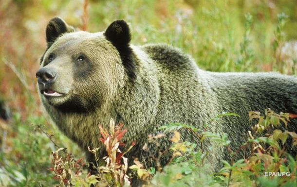 В Канаде медведь разорвал десятилетнюю девочку