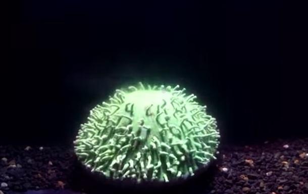 Смерть коралла впервые сняли на видео