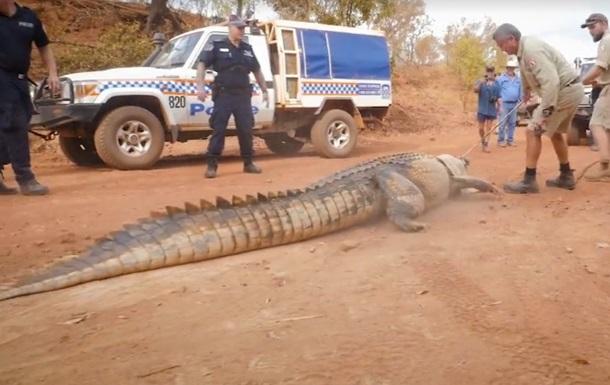 В Австралии пойман гигантский крокодил, пожирающий скот