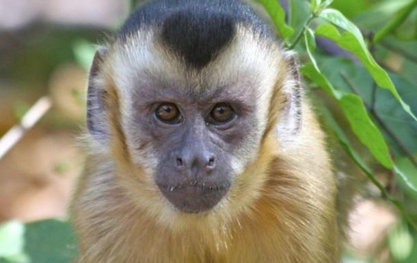 Родившуюся в Крыму обезьянку назвали в честь iPhone 7