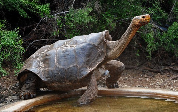 Самец галапагосской черепахи спас свой вид от вымирания