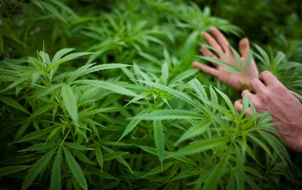 Австриец нашел марихуановый сад вместо покемонов