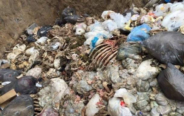 На Киевщине обнаружили опасный скотомогильник