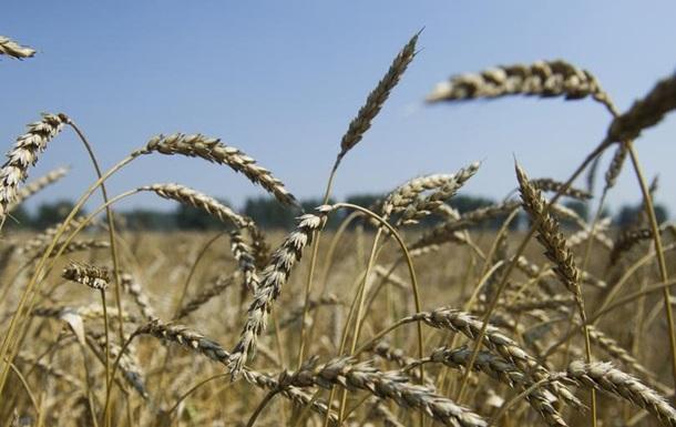 ООН: Рекордні врожаї знизять ціни на продовольство у світі