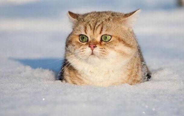 Снегопад в Украине будет сильным