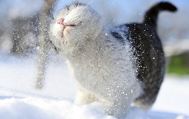 После снегопадов на Украину обрушатся морозы