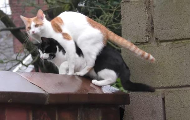 Синхронный прыжок котов рассмешил Сеть