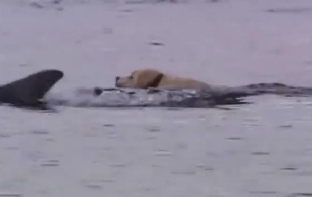 Дружба собаки и дельфина удивила Сеть