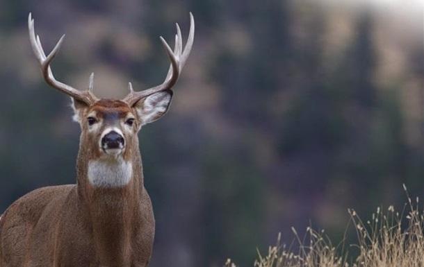 У США олень врізався в атлета під час змагань