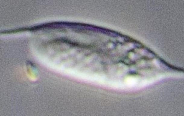Вчені виявили найбільш невловимий організм на Землі