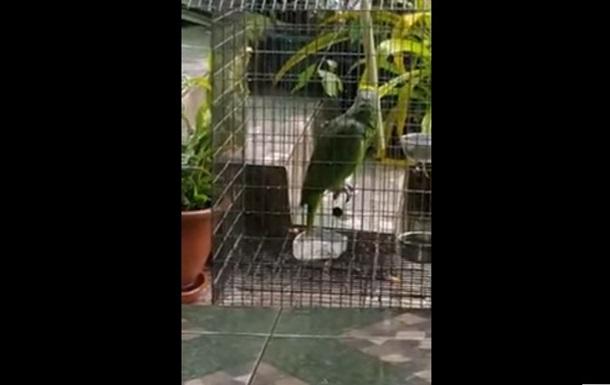 Попугай исполнил песню Sia. Хит Сети